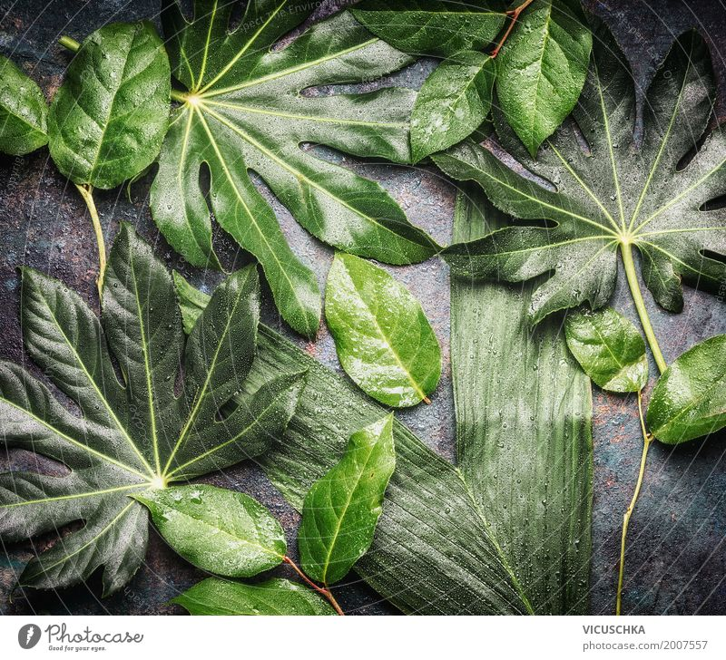 Tropical jungle leaves with water drops Lifestyle Style Design Summer Nature Plant Leaf Foliage plant Wild plant Oasis Green Drops of water Damp Virgin forest