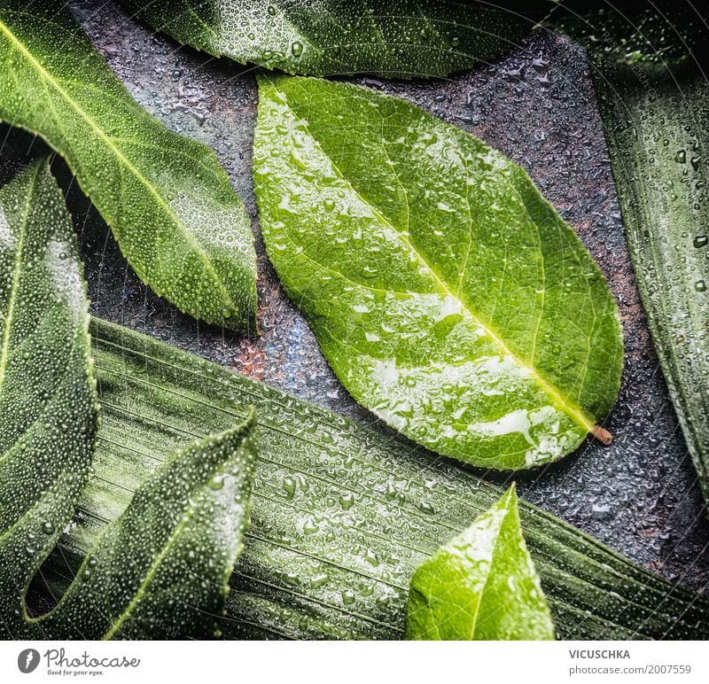 Green leaves with drops of water Style Design Life Summer Environment Nature Plant Leaf Foliage plant Drop Drops of water Colour photo Interior shot Close-up