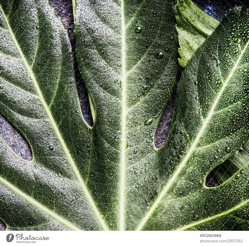 Tropical leaf Style Design Vacation & Travel Summer Environment Nature Plant Leaf Oasis Background picture Green Drops of water Colour photo Close-up Detail