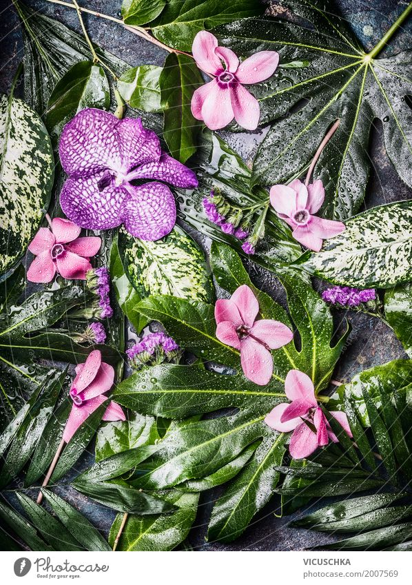 Green leaves of exotic plants and flowers Style Design Summer Garden Nature Plant Flower Foliage plant Virgin forest Oasis Ornament Hip & trendy Hibiscus