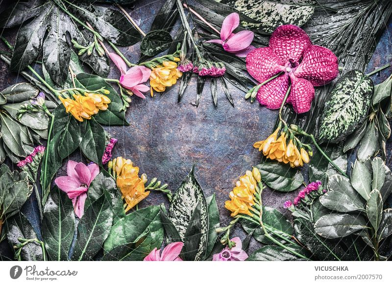 Frame with various tropical flowers and leaves Style Design Massage Summer Garden Decoration Nature Plant Flower Grass Fern Orchid Leaf Blossom Foliage plant