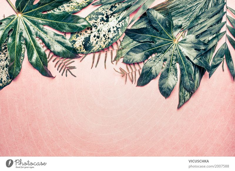 Tropical Jungle Leaves On Pink Background A Royalty Free Stock Photo From Photocase Tropical jungle leaves pattern green texture nature design pattern background summer spring art exotic wallpaper flora plant garden vector illustration leaf decoration fashion california beach modern fabric feminine palm botanical painting artwork seamless textile fashionable tropic print jungle hawaii. photocase
