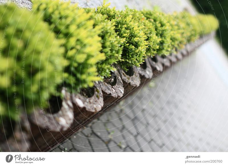 Green Plant Environment Bushes Living or residing Border Row Diagonal Parking lot Depth of field Hedge Foliage plant Pot plant