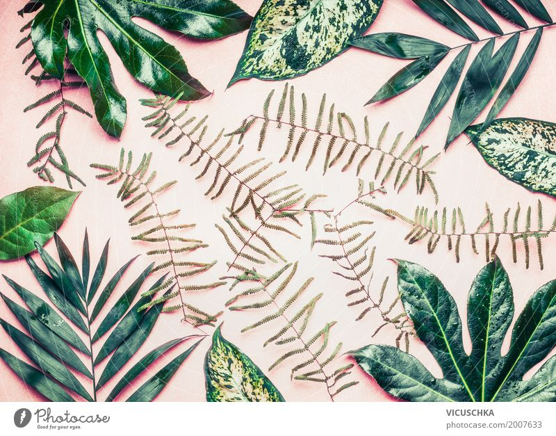 Layout with various tropical palms and fern leaves Style Design Leisure and hobbies Vacation & Travel Summer Garden Nature Plant Leaf Park Oasis Jump Pink