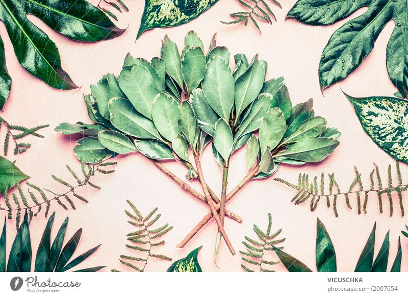 Tropical palms, fern leaves and twigs Style Design Summer Decoration Nature Plant Tree Bushes Garden Park Virgin forest Oasis Pink Hipster Leaf Tropical garden