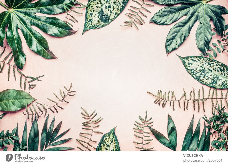 Frames of tropical plants and fern leaves Style Design Summer Garden Decoration Nature Plant Leaf Park Oasis Background picture Tropical Tropical garden