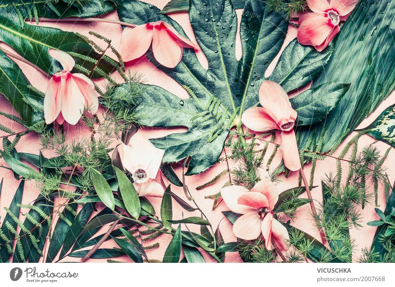 Tropical flowers and leaves on pink background Design Summer Garden Nature Plant Virgin forest Oasis Pink Style Tropical greenhouse Exotic Flower Leaf Palm tree