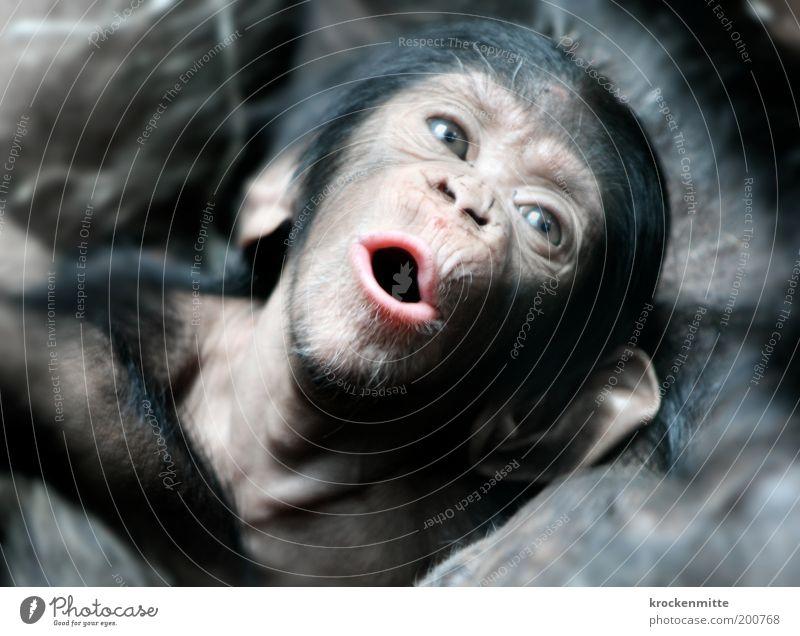 Joy Love Eyes Animal Baby animal Together Open Ear Communicate Animal face Wild animal Pelt Zoo Warm-heartedness Captured