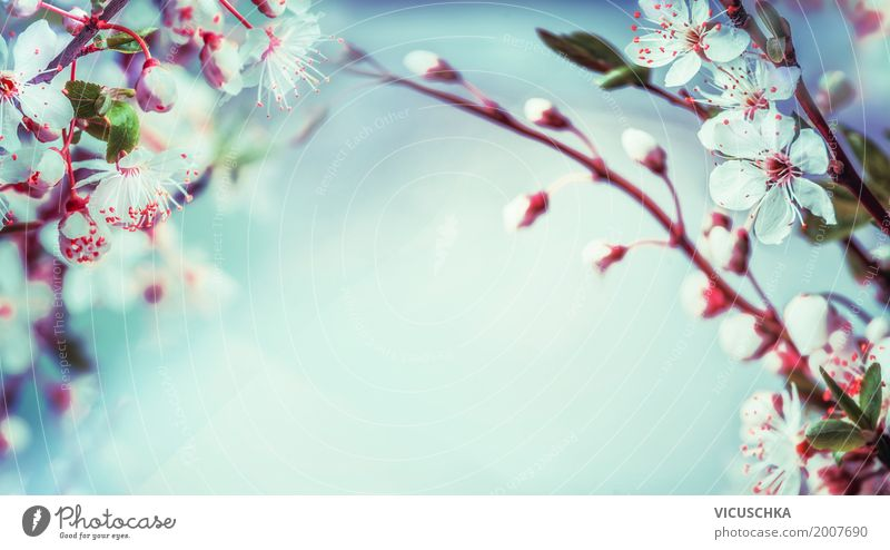 Sky Nature Plant Blue Leaf Blossom Spring Background picture Garden Design Pink Park Blossoming Soft Spring fever Twigs and branches