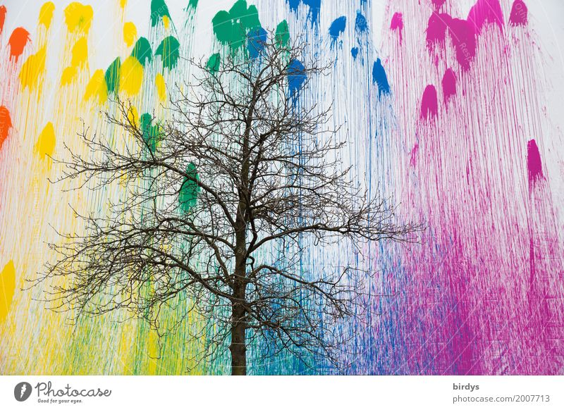 Gradient The background knowledge makes you confident. Design Art Youth culture Autumn Winter Tree Wall (barrier) Wall (building) Facade Graffiti Colour palette