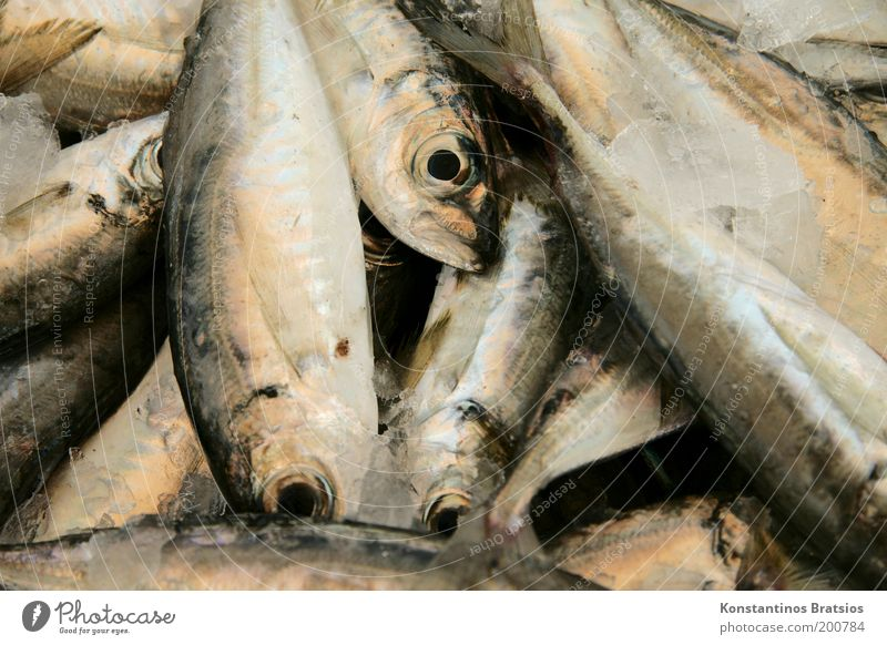Eyes Death Nutrition Food Fresh Fish Fish Group of animals Appetite Delicious Fishing (Angle) Organic produce Quality Mediterranean sea Markets Fin