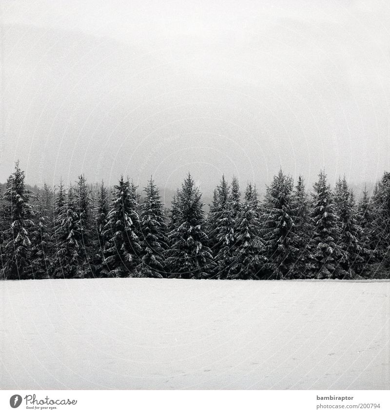 winter Environment Nature Landscape Plant Cloudless sky Winter Weather Ice Frost Snow Tree Forest Growth Cold Perspective Analog Sky Black & white photo