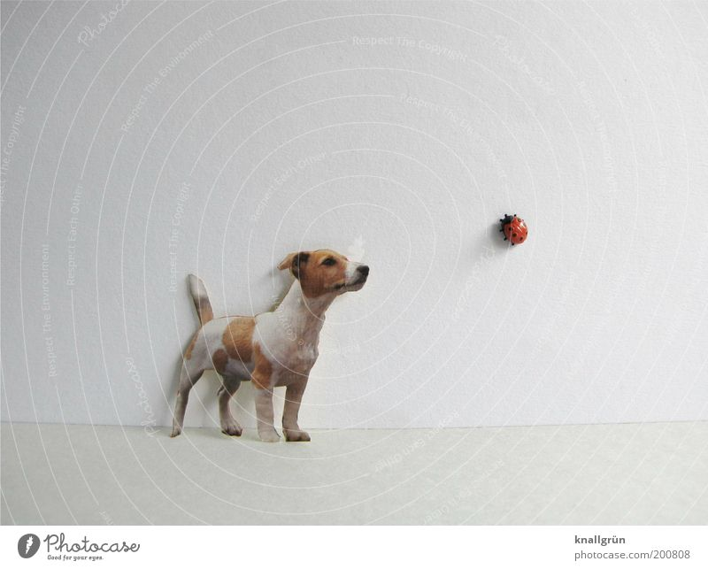 encounter Animal Pet Dog Ladybird 2 Observe Crawl Looking Stand Brown Red Black White Discover Curiosity Perspective Whimsical Plastic Terrier