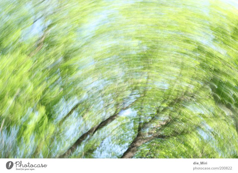 forest strudel Environment Nature Spring Tree Rotate Blue Green Moody Colour photo Exterior shot Experimental Deserted Day Sunlight Motion blur Rotation Circle