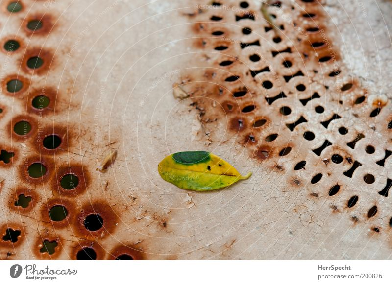 White Green Leaf Brown Metal Decline Rust Hollow Varnish Table Section of image Plate with holes Foliage plant Flake off Limp Scratch mark