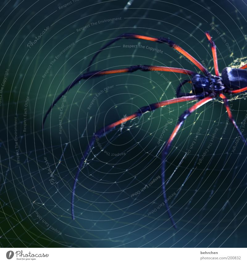 Nature Animal Fear Environment Dangerous Threat Spider Horror Patient Spider's web Scare Spider legs