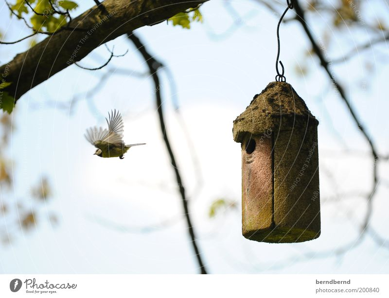 nesting Nature Air Sky Beautiful weather Tree Animal Wild animal Bird Tit mouse 1 Flying Cute Blue Brown Green Life Protection Offspring Nest Wing Movement