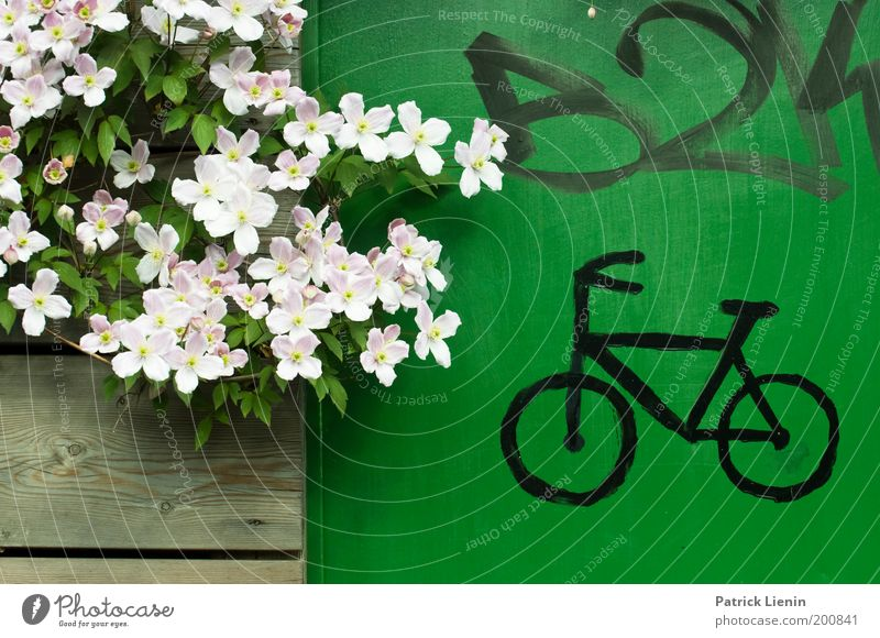 Nature Beautiful Flower Green Plant Blossom Spring Wood Graffiti Bicycle Door Environment Fresh Blossoming Drawing