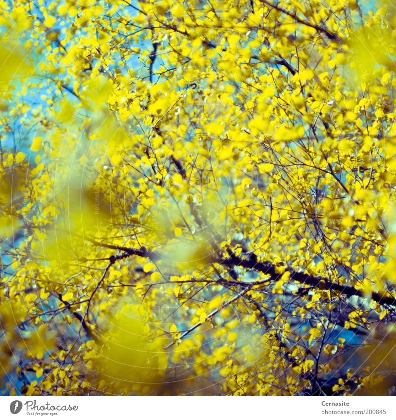 Amusing Skies Sky Nature Blue Tree Plant Far-off places Yellow Spring Bright Exceptional Crazy Esthetic Europe Uniqueness Soft Infinity