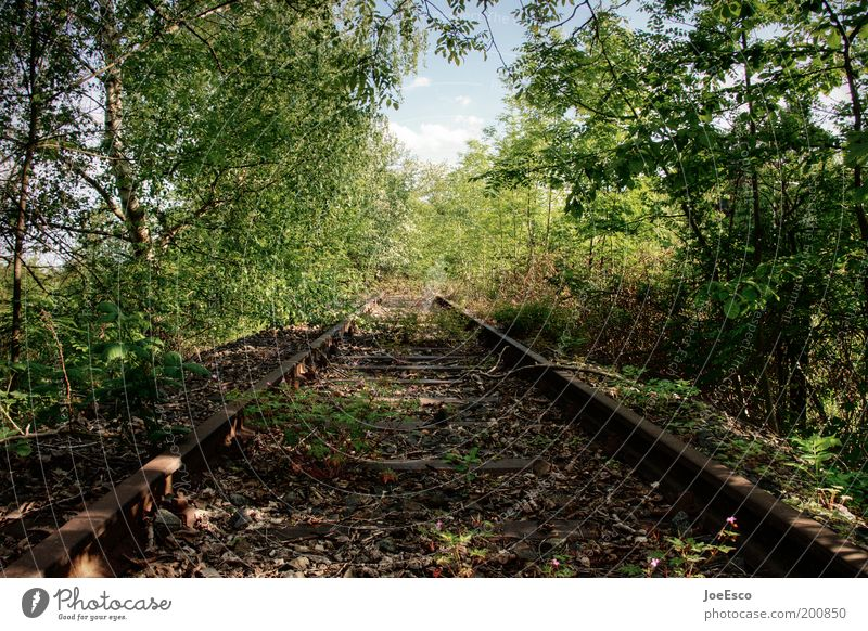 last train to... Leisure and hobbies Vacation & Travel Trip Freedom Environment Plant Spring Tree Grass Bushes Foliage plant Forest Wild Decline Derelict