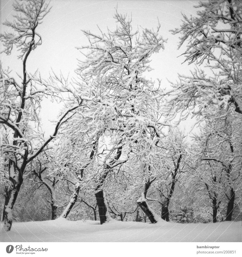 winter wonderland Environment Nature Landscape Plant Winter Climate Weather Ice Frost Snow Tree Forest Freeze Growth Old Cold Beautiful Analog Headstrong Branch