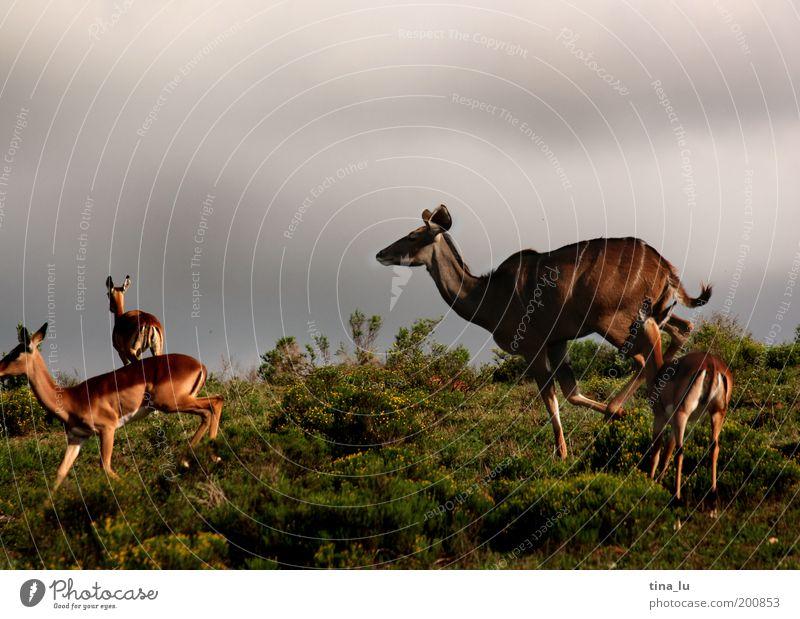 Nature Summer Joy Vacation & Travel Animal Life Jump Freedom Fear Running Africa Joie de vivre (Vitality) Flexible Steppe Safari Expedition