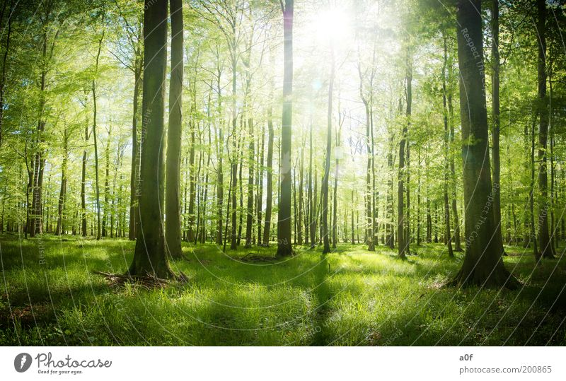 ...first light Environment Nature Spring Beautiful weather Plant Tree Forest To enjoy Free Bright Clean Green Spring fever Purity Dream Loneliness Relaxation