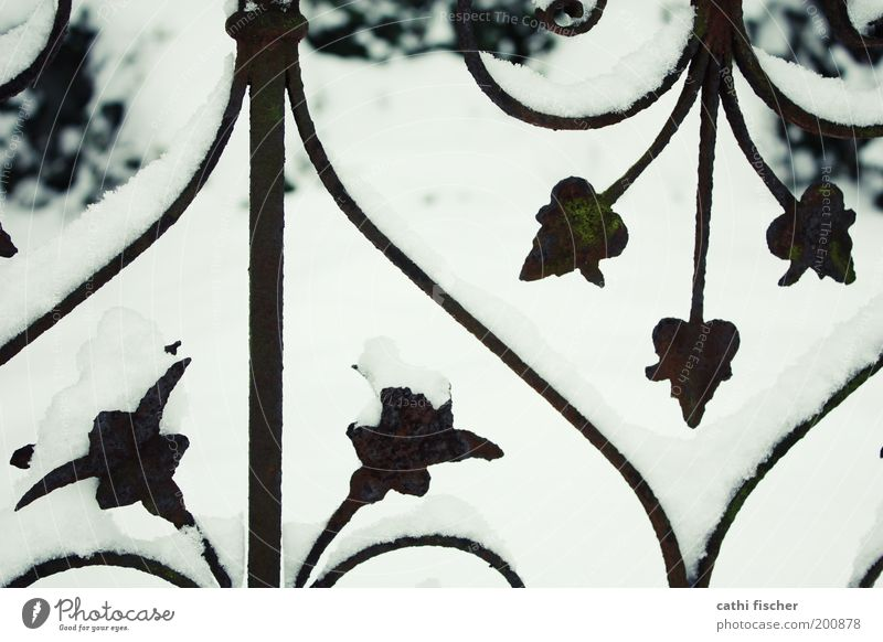 fence Winter Weather Ice Frost Snow Plant Black White Rust Fence Ornate Heart Bright Symmetry Kitsch Ornament Pattern Subdued colour Deserted Day Contrast
