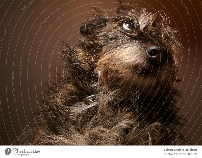 Animal Gray Dog Brown Hope Longing Pelt Cute Appetite Pet Cuddly Emotions Action Looking Love of animals Beg