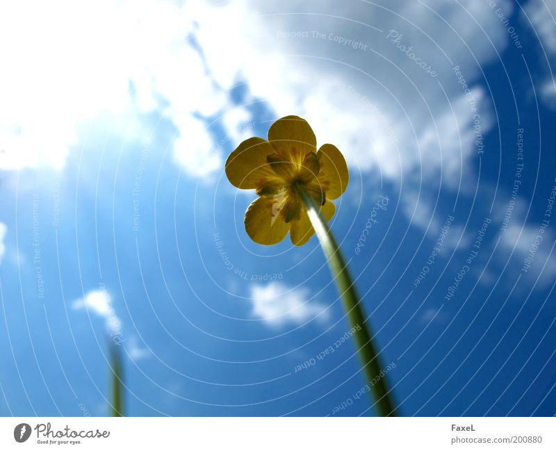 Sky Nature Plant Blue Beautiful Environment Yellow Life Blossom Spring Meadow Natural Contentment Growth Elegant Esthetic