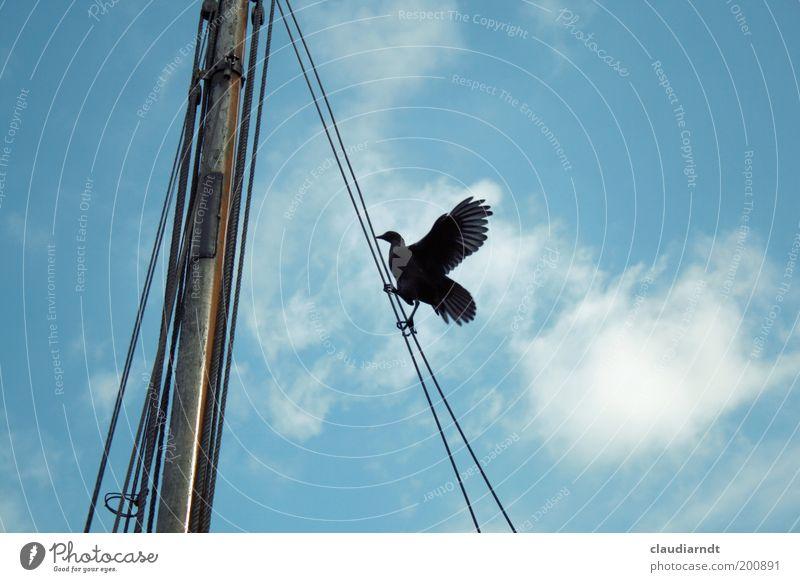 Sky Black Animal Above Power Bird Rope Tall Wing Climbing Brave Wild animal Upward Career Go up Balance
