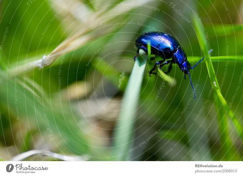 Nature Blue Green Animal Environment Spring Meadow Natural Grass Small Garden Wild animal Blade of grass In transit Beetle Crawl