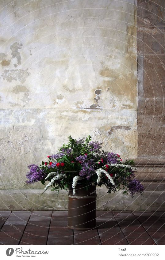 bouquet Environment Nature Plant Flower Church Dome Wall (barrier) Wall (building) Bouquet Blossom Column Ground Stone Stone slab Vase Tub Colour photo