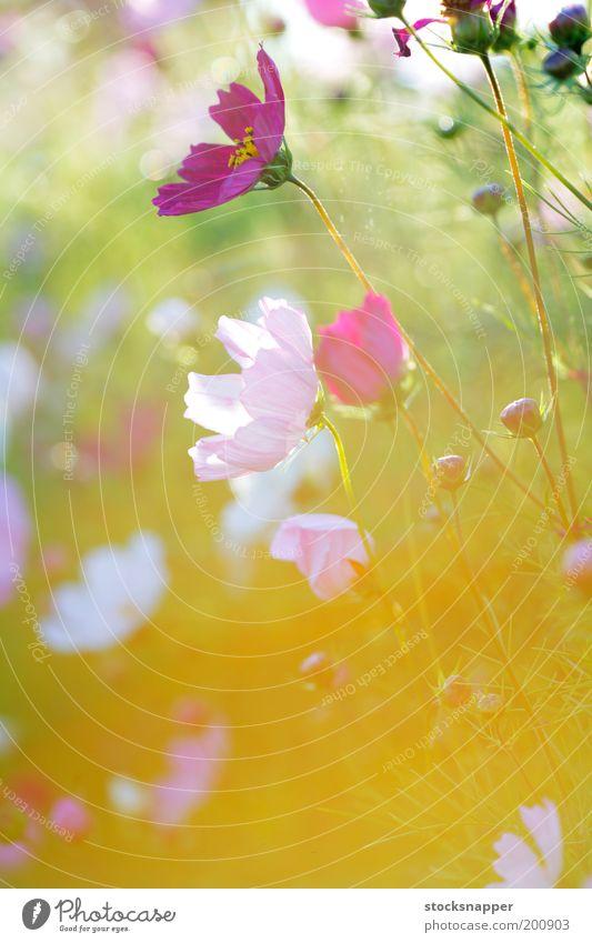 Summer Flowers Flower Summer Light