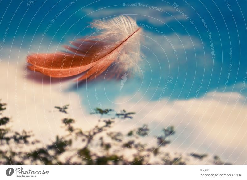 Sky Nature Heaven Beautiful Landscape Clouds Environment Natural Style Lifestyle Exceptional Freedom Decoration Feather Uniqueness