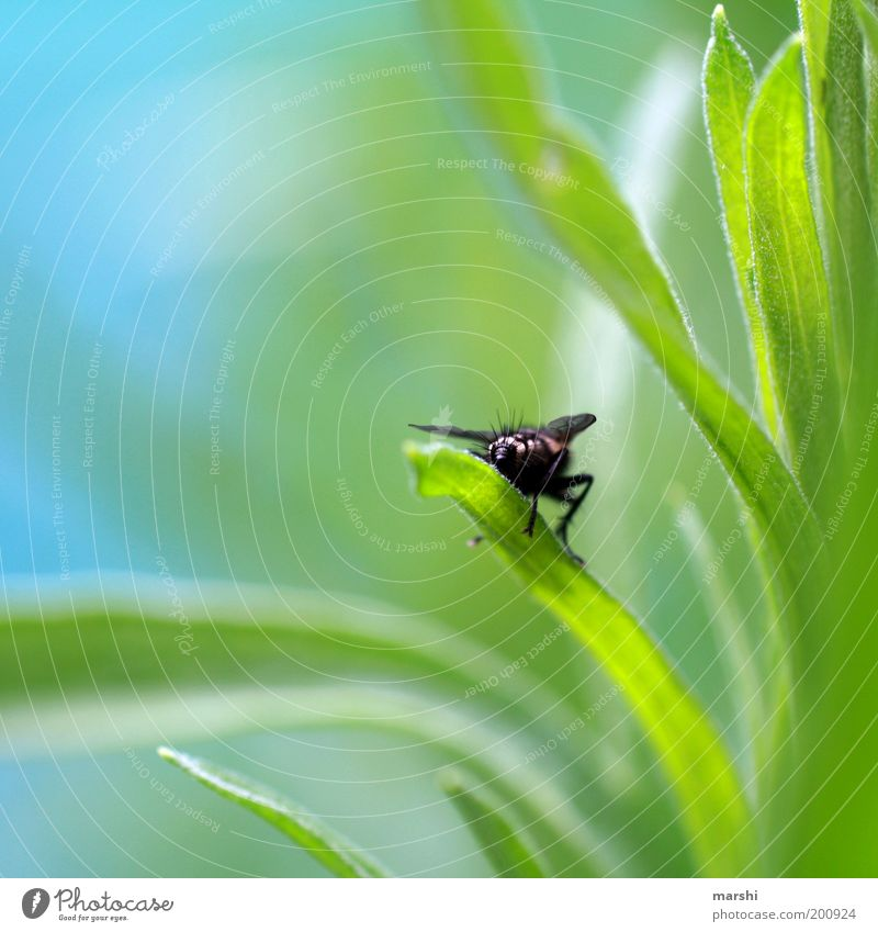 fly bottom Nature Plant Animal Spring Summer Garden Meadow Fly 1 Sit Small Blue Green Rear view Hind quarters Blur Detail Close-up Departure Colour photo