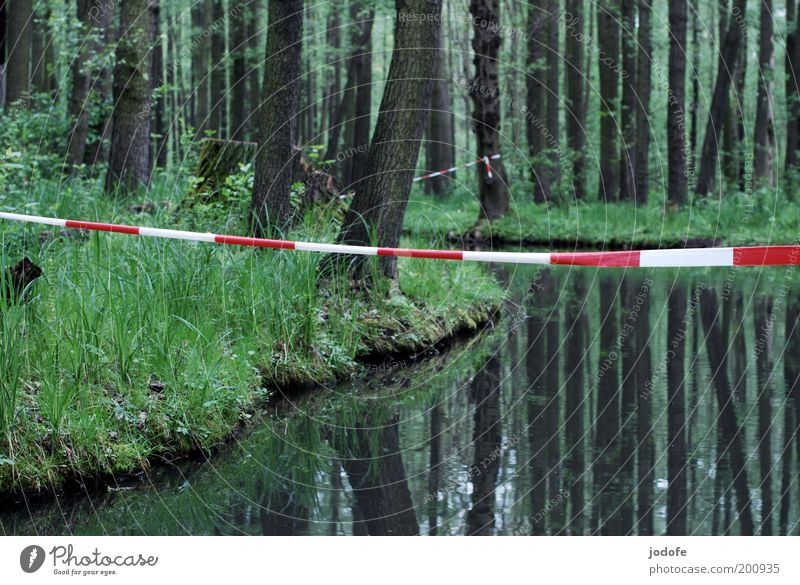 Nature Water White Tree Plant Red Calm Loneliness Forest Cold Grass Spring Landscape Environment River Virgin forest