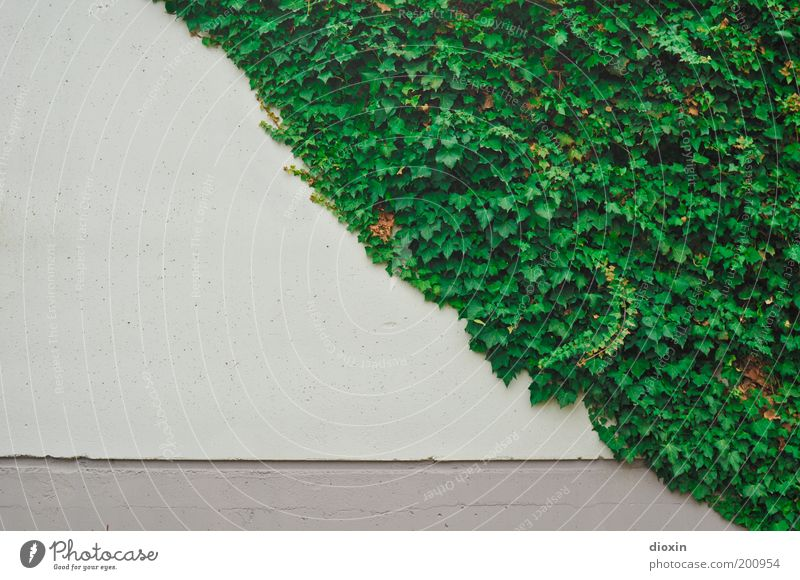 Nature Green White Plant Leaf Wall (building) Gray Building Wall (barrier) Concrete Natural Growth Manmade structures Diagonal Half Converse
