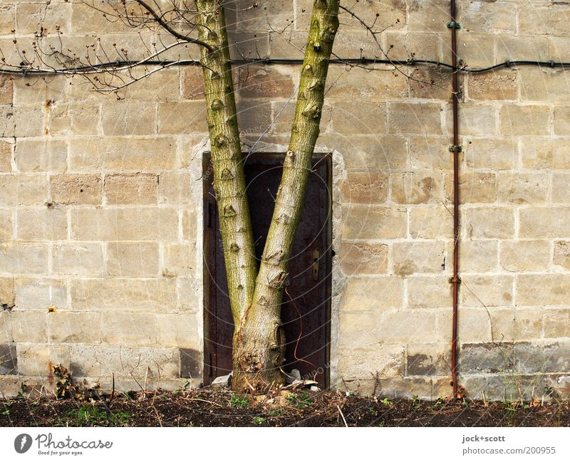 Dinosaur is at the door (idea of time.) Tree trunk Closed Poised to act Stone wall Barrier Futile Metal door Ravages of time GDR Subdued colour