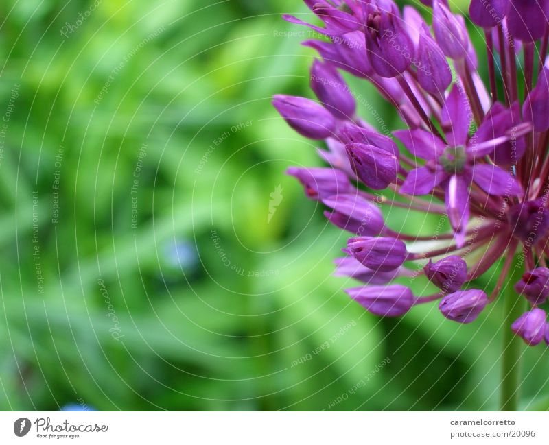Flower Green Blossom Violet