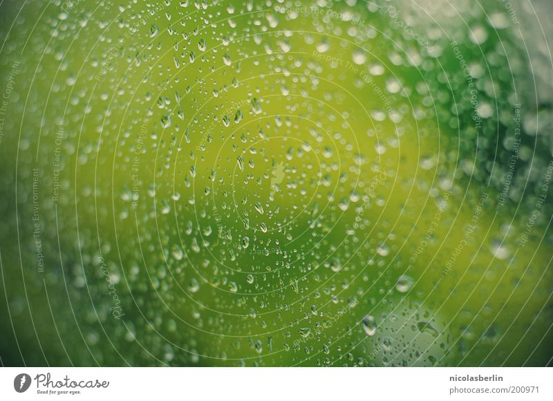Water Tree Green Plant Calm Window Spring Sadness Rain Glass Weather Environment Drops of water Wet Gloomy Drop