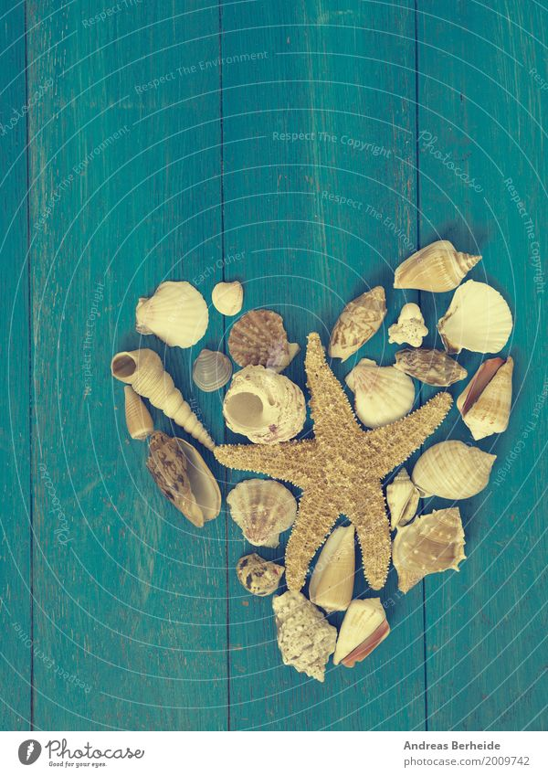 A heart for holidays Vacation & Travel Summer Beach Valentine's Day Nature Sand Relaxation Love shape shell Background picture sea starfish
