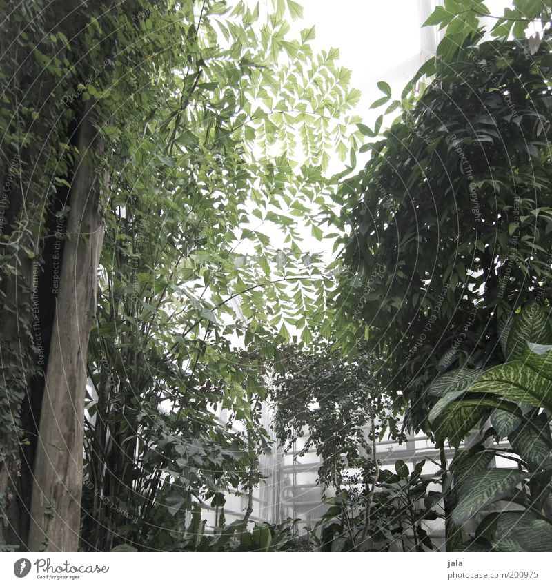 Tree Green Plant Leaf Garden Warmth Bushes Virgin forest Foliage plant Greenhouse Wild plant Tropical greenhouse