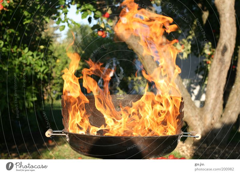 THE FLAMING GRILL MK III Environment Nature Plant Fire Tree Garden Meadow Barbecue (apparatus) Hot Yellow Red Dangerous Barbecue (event) Warmth Apple Burn