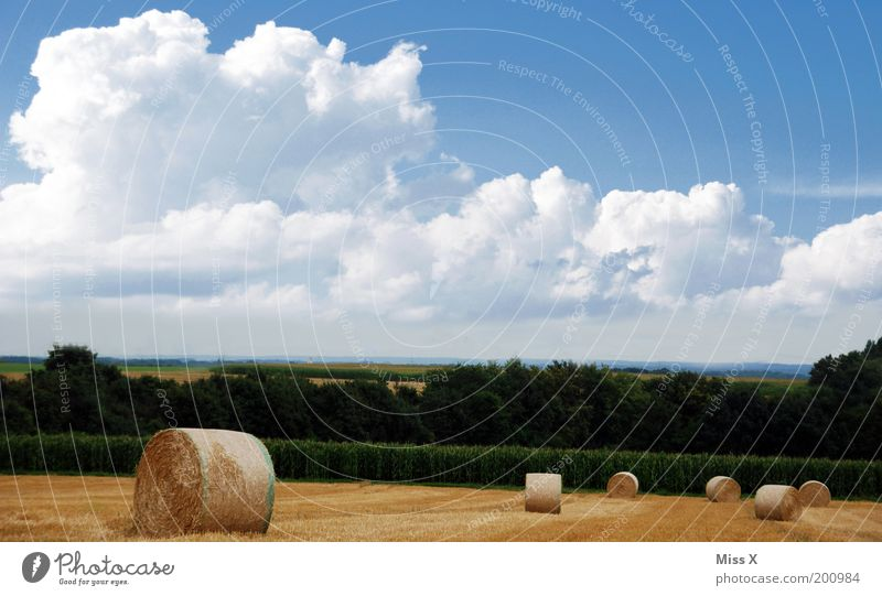 Nature Sky Summer Calm Clouds Autumn Meadow Landscape Field Trip Round Bushes Agriculture Harvest Beautiful weather