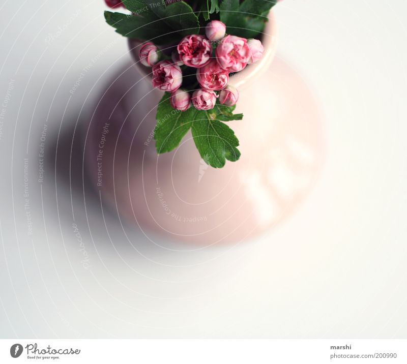Beautiful White Flower Green Plant Red Flat (apartment) Small Pink Perspective Decoration Living or residing Delicate Vase