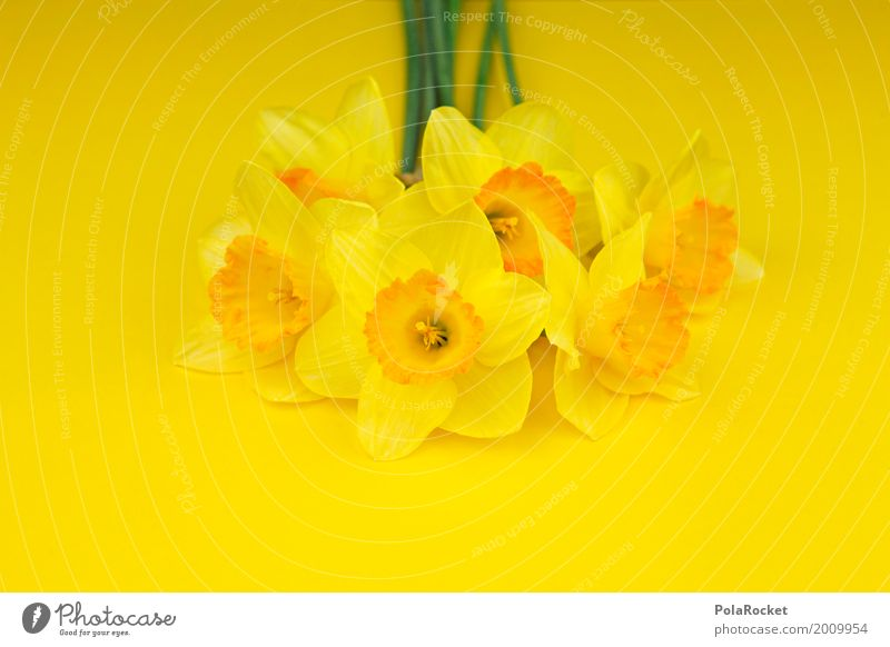 #AS# Easter Yellow III Art Esthetic Flower Bouquet Narcissus Gaudy Nature Mother's Day Colour photo Multicoloured Interior shot Studio shot Close-up Detail