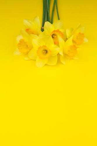 Flower Yellow Blossom Spring Art Esthetic Easter Many Bouquet Spring flower Easter egg nest Narcissus Spring colours Easter wish Spring celebration