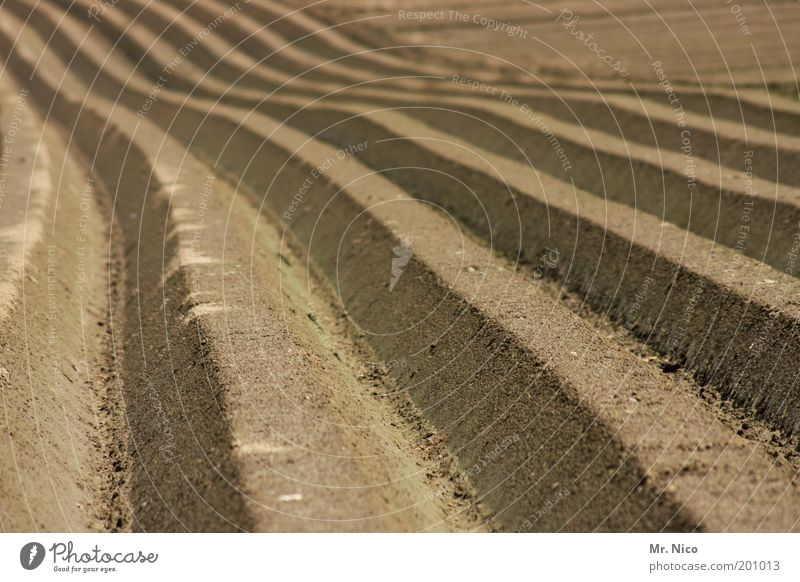 Nature Plant Environment Line Horizon Brown Earth Field Climate Growth Hill Infinity Row Harvest Agriculture