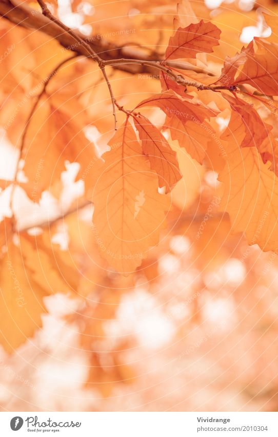 Leaves on a sunny morning, Fall season Nature Plant Spring Autumn Tree Park Forest Warmth Orange White Romance Colour Vacation & Travel leaves Leaf Tree trunk